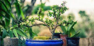 Optymalne plonowanie roślin dzięki nawożeniu dolistnemu