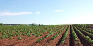 Co ma znaczenie przy decydowaniu się na zakup preparatów rolniczych